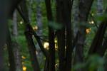 Golden sun through trees